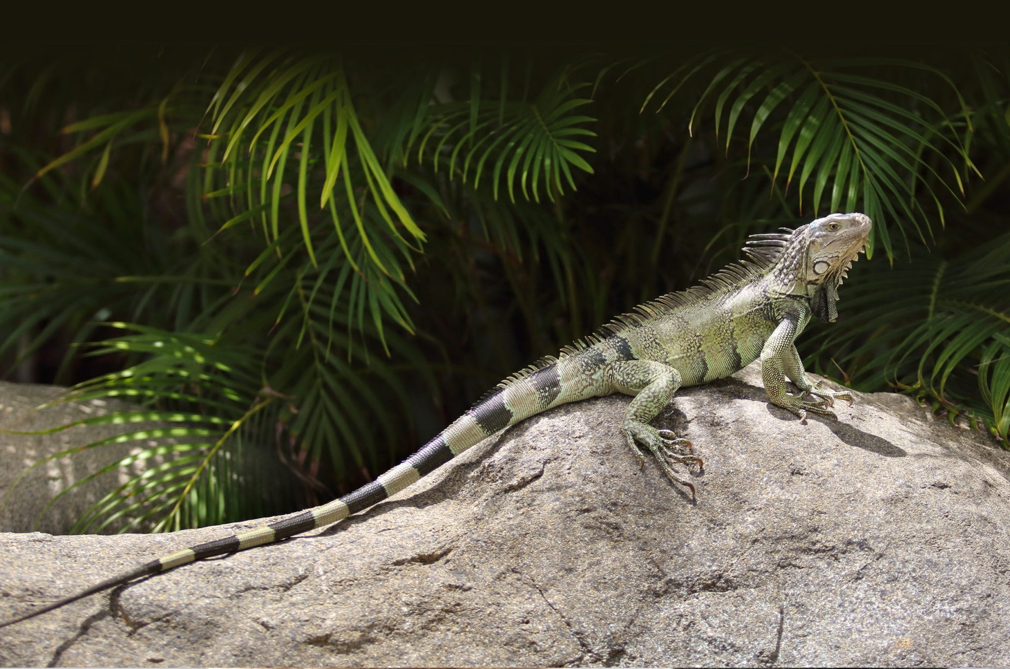 lizard sitting on a rock